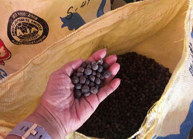 Philippine coffee farm tour